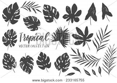 Vector Set With Isolated Tropical Leaves On White Background. Vector Tropical Palm Leaves, Jungle Le