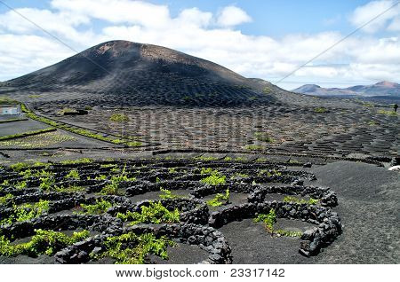 Vineyards In La Geria, Lanzarote, Spain.