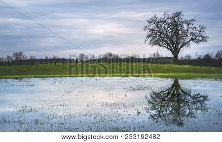 Gloomy Spring Scenery With A Single Big Tree, On A Green Meadow And Its Reflection In A Small Pond,