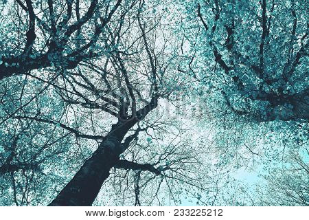 Mystical Trees Brunches Silhouettes On The Colorful Sky Background. Photo Depicting A Creepy Gnarled