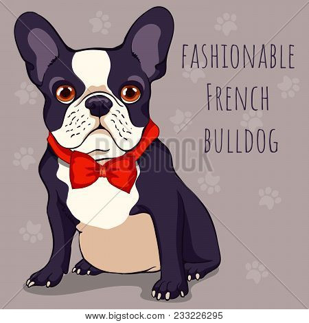 Fashionable Cute French Bulldog With A Black And White Color Of Wool In Red Bow Tie. Cartoon Charact