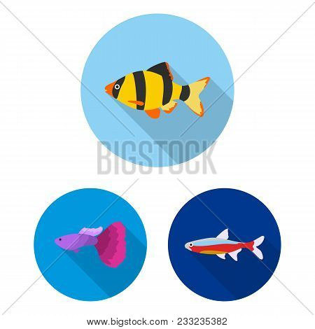 Different Types Of Fish Flat Icons In Set Collection For Design. Marine And Aquarium Fish Vector Sym