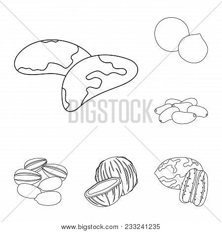 Different Kinds Of Nuts Outline Icons In Set Collection For Design.nut Food Vector Symbol Stock  Ill