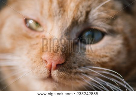Extreme close up of cat nose poster