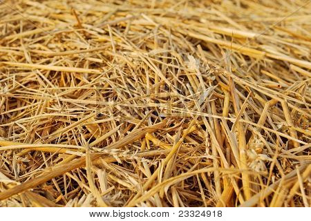 Yelow Hay Closeup