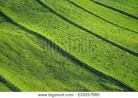 Green Meadow, Countryside