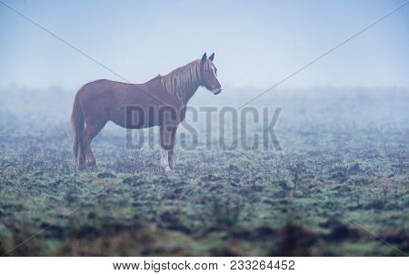 Solitary Brown Horse Standing In Foggy Pasture.