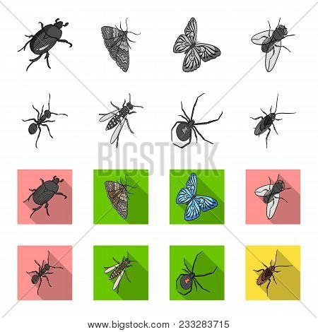An Insect Arthropod, An Osa, A Spider, A Cockroach. Insects Set Collection Icons In Monochrome, Flat