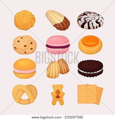 Cookie And Biscuits Vector Baking Pastry And Baked Cooking For Breakfast In Bakery Illustration Cand