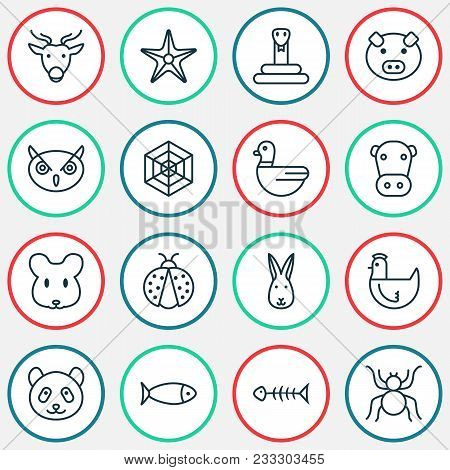 Nature Icons Set With Arachnid, Spider Web, Rabbit And Other Seafood Skeleton Elements. Isolated Vec