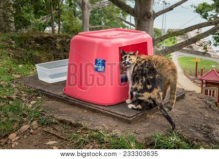 San Juan, Pr - March 4, 2018: Save A Gato Provides Food For Abandoned Cats In San Juan, Puerto Rico.