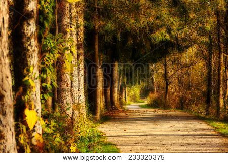 A Forest Path Winds By Dark Old Trees And Thick Vegetation Filled With Mysterious Light