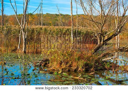 Detail Of The Lush Ecosystem Of Beaver Marsh In Cuyahoga Valley National Park