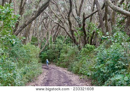 Lone Girl Walking A Trail In Rangitoto Island New Zealand