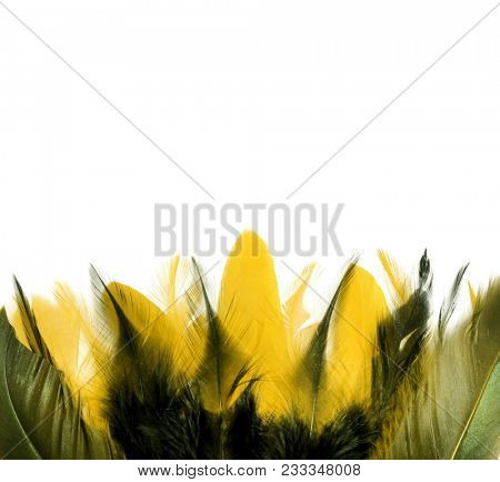 Rooster feathers. Carnival. Yellow feather on a white background