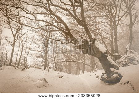 Enchanted Winter Landscape With Snow In The Park Of Monte Cucco, Umbria