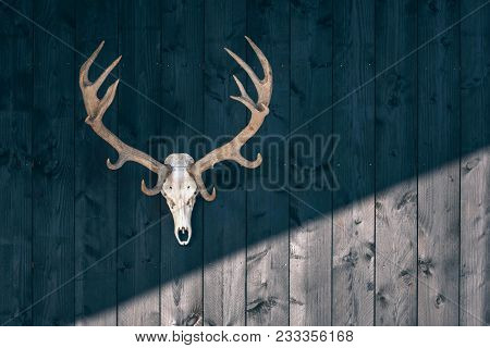 Red Deer Skull Hanging On Black Wooden Wall Of Barn.