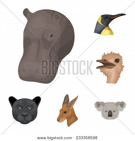 Wild Animal Cartoon Icons In Set Collection For Design. Mammal And Bird Vector Symbol Stock  Illustr