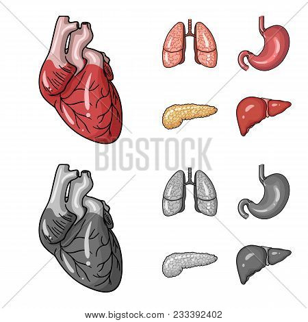 Heart, Lungs, Stomach, Pancreas. Human Organs Set Collection Icons In Cartoon, Monochrome Style Vect