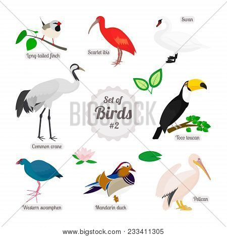 Set Of Birds. Colorful Realistic Birds. Long-tailed Finch, Scarlet Ibis, Swan, Toco Toucan, Pelican,