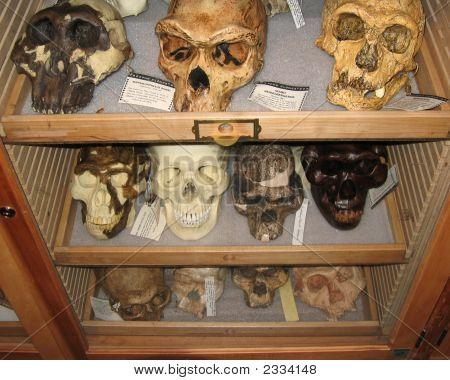 Skulls On Display