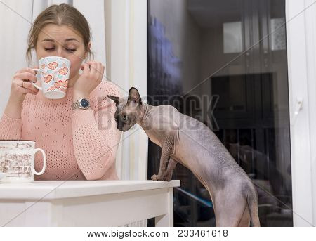 Girl Drinking Tea From A Mug At The Table, Bald Cat Climbs On The Table, Curious Looking, Canadian S