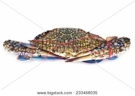 Fresh Crab For Cooking, Close Up Of Crustacean Isolated On White Background
