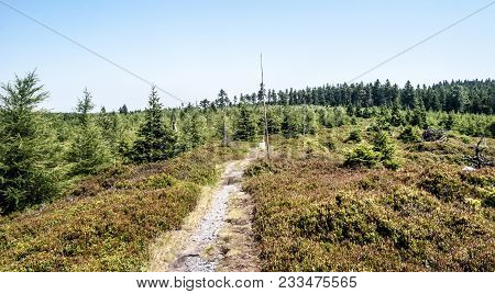 Czech - Polish Border Trail In Rychlebske Hory Mountains Near Brousek Hil With Bilberry Shrubs, Tree