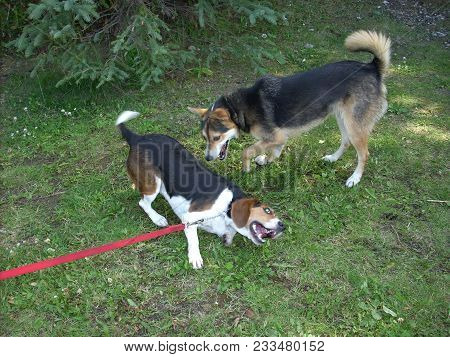 Two Dogs Playing With Each Other In The Park
