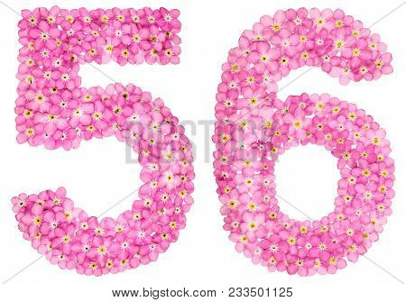 Arabic Numeral 56, Fifty Six, From Pink Forget-me-not Flowers, Isolated On White Background