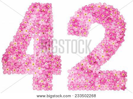 Arabic Numeral 42, Forty Two, From Pink Forget-me-not Flowers, Isolated On White Background