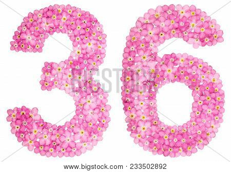 Arabic Numeral 36, Thirty Six, From Pink Forget-me-not Flowers, Isolated On White Background