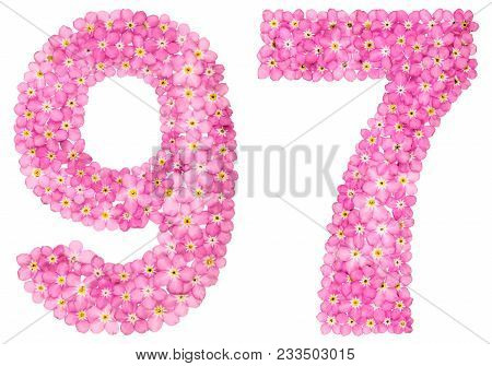 Arabic Numeral 97, Ninety Seven, From Pink Forget-me-not Flowers, Isolated On White Background