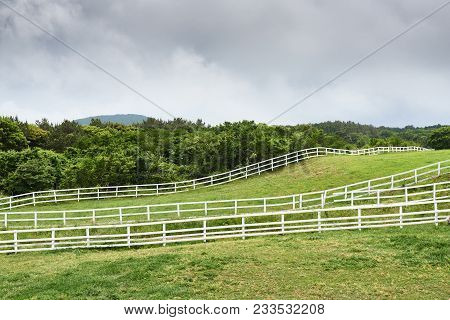 Landscape Of Horse Ranch In Jeju Island. Jeju-do Is The Largest Island Of Kroea And A Famous Attract