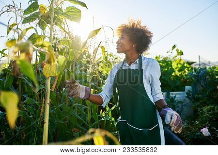 young african american woman tending to crops inside community garden