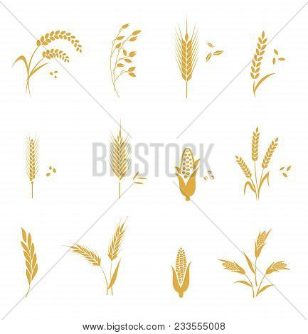 Concept For Organic Products Label, Harvest And Farming, Grain, Bakery, Healthy Food. Agricultural S