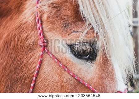 Horizontal Photo Depicts Beautiful Lovely Brown And White Horse Gazing On A Horse Yard. .horse Face.