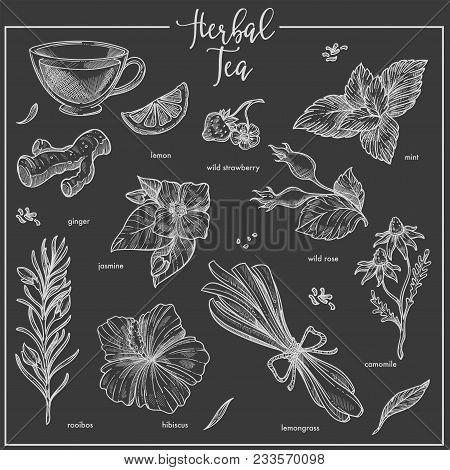 Herbs Sketch For Herbal Tea. Vector Isolated Icons Of Herbal Plants For Tea Infusion Flavoring Lemon