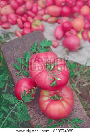 Pink Vegetables Of Tomato