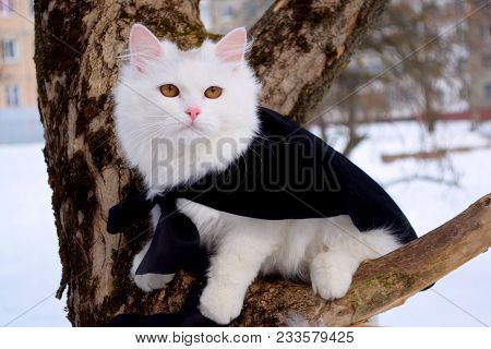 White Cat On Tree In Winter Snow Day. Cute Fluffy White Cat Sitting On Tree Branch Against Snow In W