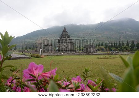 Beautiful Flower And Arjuna Temple In Cloudy Day At Dieng Plateau, Central Of Java, Indonesia.