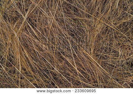 Dry Grass Field. Dry Grass Texture Background. Yellow. Spring Background. Yellow Grass