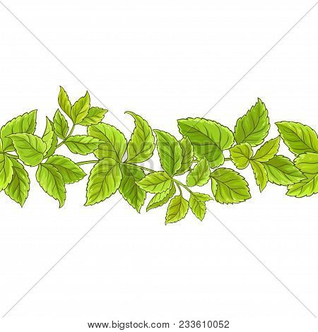 Melissa Plant Vector Pattern On White Background