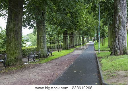Beautiful Alley Of Old Large Deciduous Trees. Walking Path With Benches Along The River. City Landsc