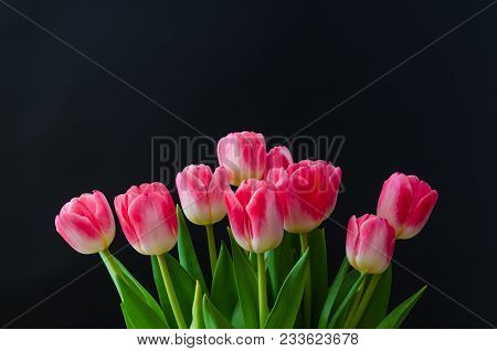 Pink Tulips Arrangement By A Black Background