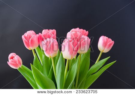 Bunch Of Bright Blossom Pink Tulip Flowers
