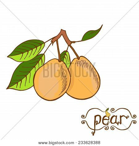 Big Yellow Pear On White Background Isolated. Pear Branch With Two Pears And Leaves.