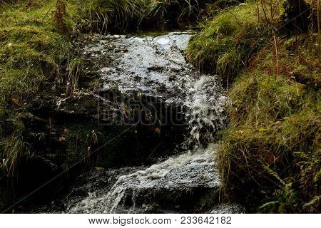 Small Stream In Forest