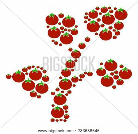 Flora Plant Composition Of Tomato In Various Sizes. Vector Tomato Vegetable Symbols Are Combined Int