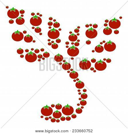 Sprout Mosaic Of Tomato Vegetables In Different Sizes. Vector Tomato Objects Are United Into Sprout